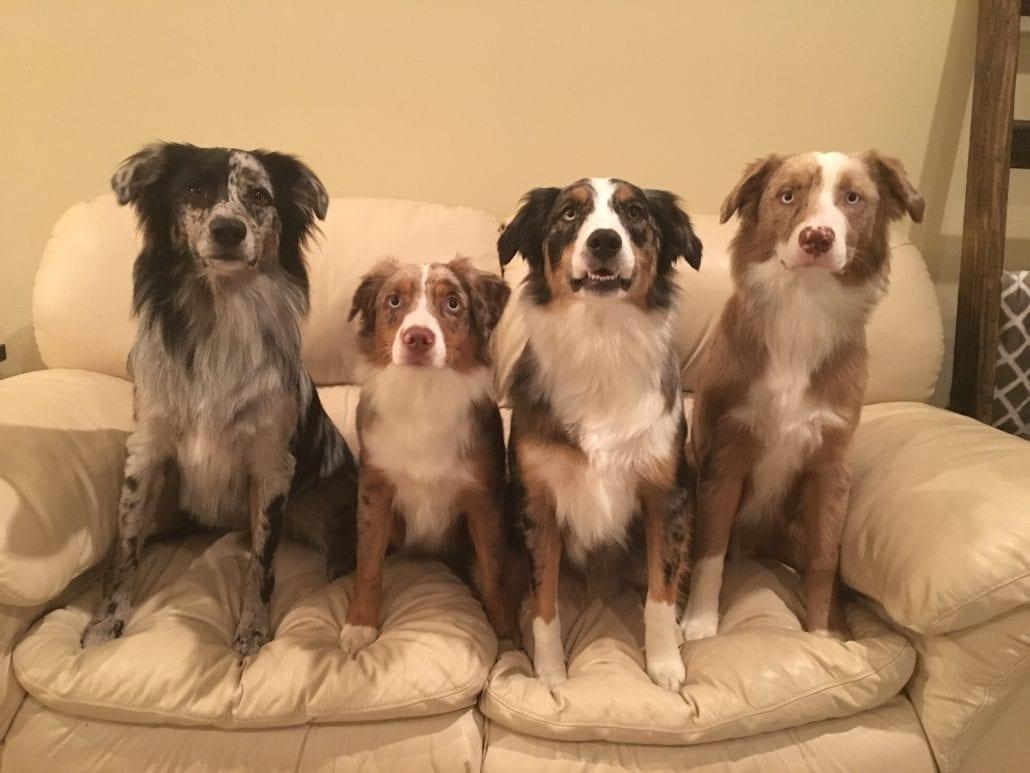 Pet Insurance Adds Care