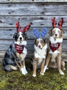 Pet Insurance Provides Safety During the Holidays