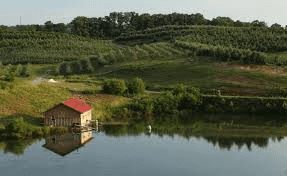 Merciers Apple Orchard
